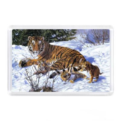 Магнит Тигр на снегу