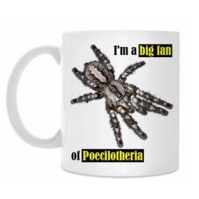 Кружка Poecilotheria