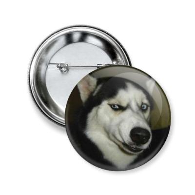 Значок 50мм собака-сомневака
