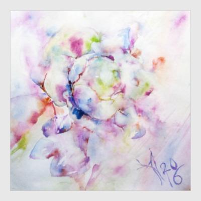 Постер Распускающаяся роза