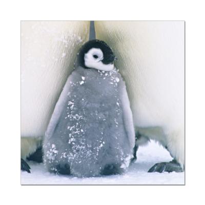 Наклейка (стикер) Пингвиненок