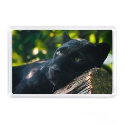 Магнит Пантера на дереве