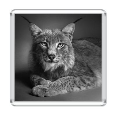 Магнит Серия Красивые Животные