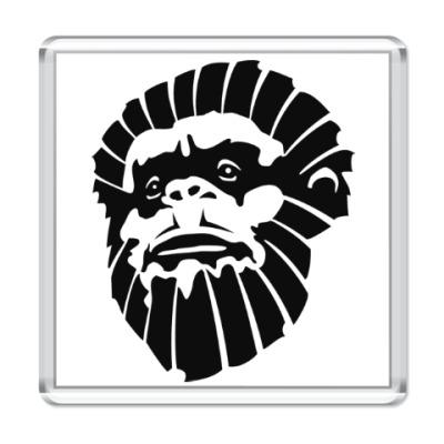 Магнит Лицо обезьяны