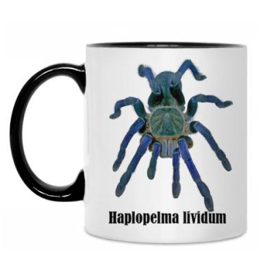 Кружка H.lividum