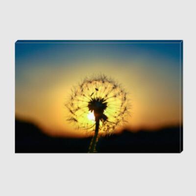 Холст цветы макро