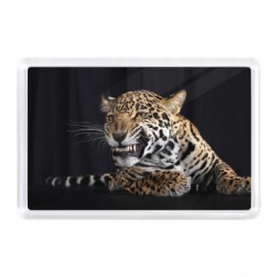 Магнит Оскал леопарда