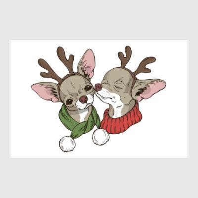 Постер пара милых маленьких собак