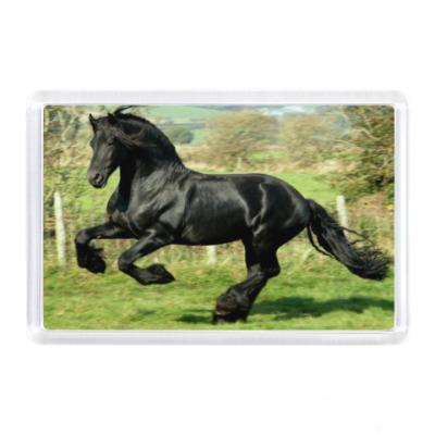 Магнит Черный конь