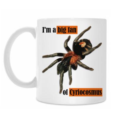 Кружка Cyriocosmus