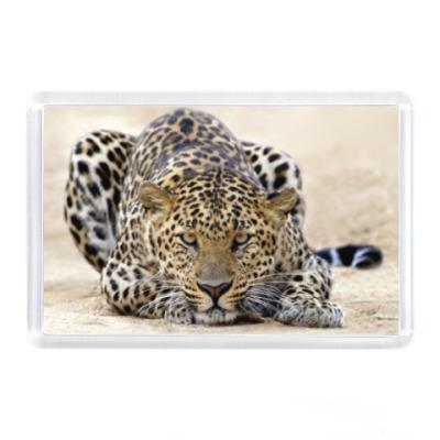 Магнит Атака леопарда