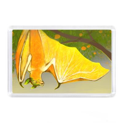 Магнит Апельсиновый крылан