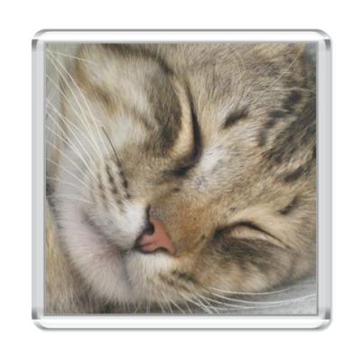 Магнит   Спящий кот