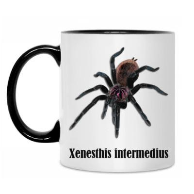 Кружка Intermedius
