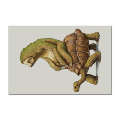 Наклейка (стикер) Ленивец на черепахе