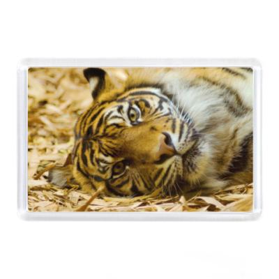 Магнит Тигр смотрит