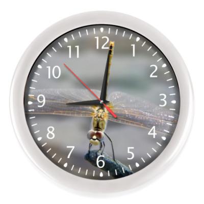 Настенные часы Стрекоза