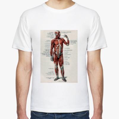 Футболка Мышечная система человека