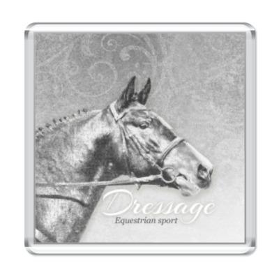 Магнит Конный спорт, лошади. Dressage