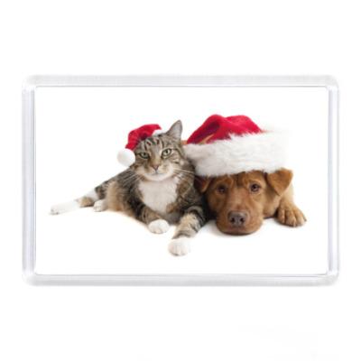 Магнит Кот и пес