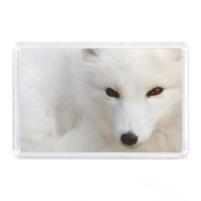 Магнит Белый лис