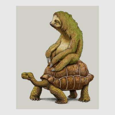 Постер Ленивец на черепахе