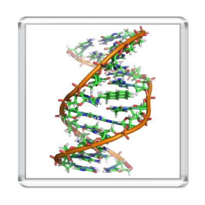 Магнит ДНК