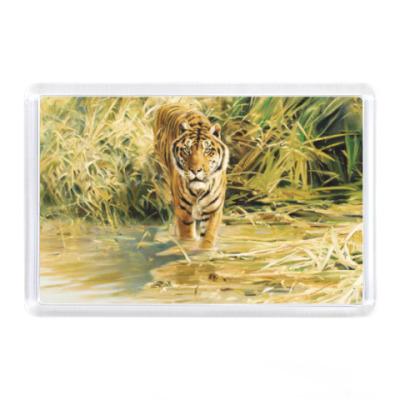 Магнит Тигр в джунглях
