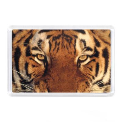 Магнит Голова тигра