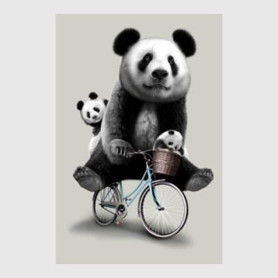 Постер Панды на велосипеде
