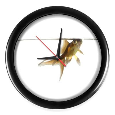 Настенные часы Рыбка