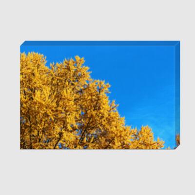 Холст Высокая контрастность: лиственница