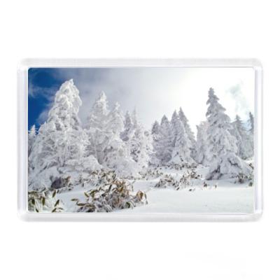 Магнит Зимний лес