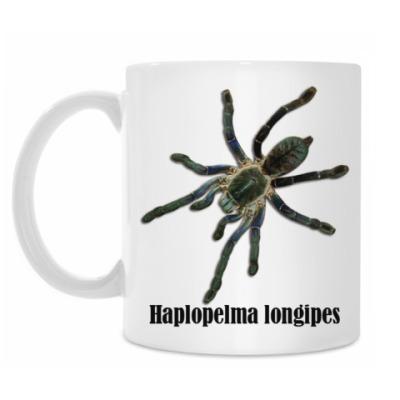 Longipes Tiger