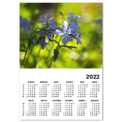 Календарь садовая фиалка