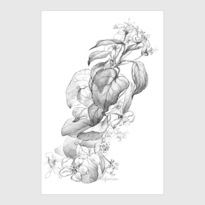 Постер Цветущая яблоня