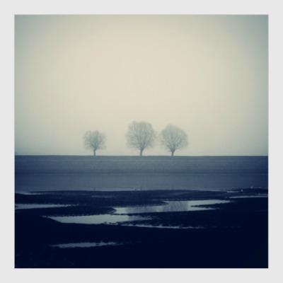 Постер Три дерева