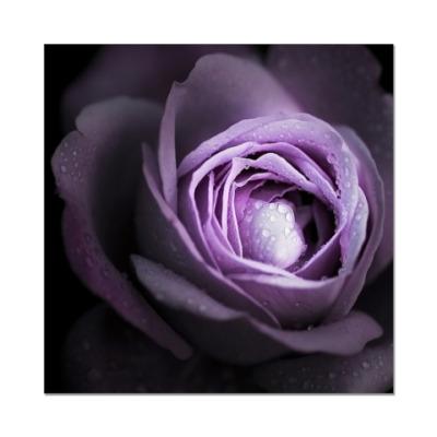 Наклейка (стикер)  Violet Rose