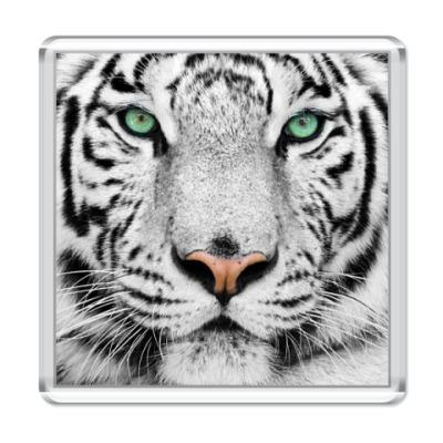 Магнит «Tigris»