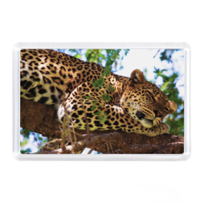 Магнит Леопард спит