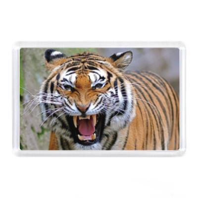 Магнит Рев тигра