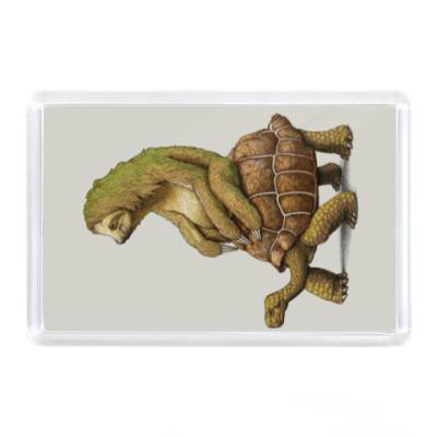 Магнит Ленивец на черепахе