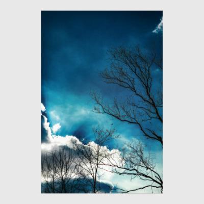 Постер Небо и ветки