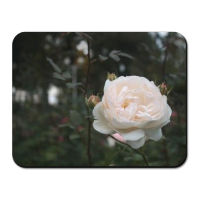 Коврик для мыши Роза