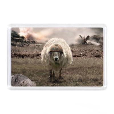 Магнит Овца в каске, война