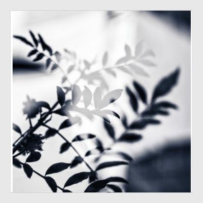Постер Black leaves