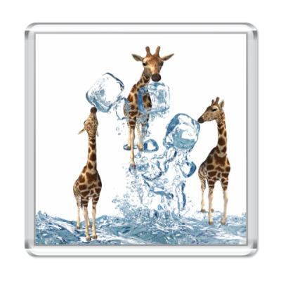 Магнит три жирафа