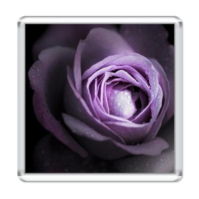 Магнит  Violet Rose