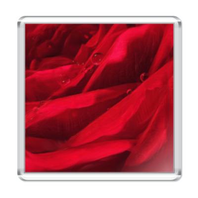 Магнит цвет розы