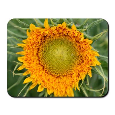 Коврик для мыши Sunflower